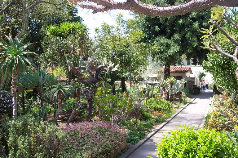 Captivating Cactus Garden
