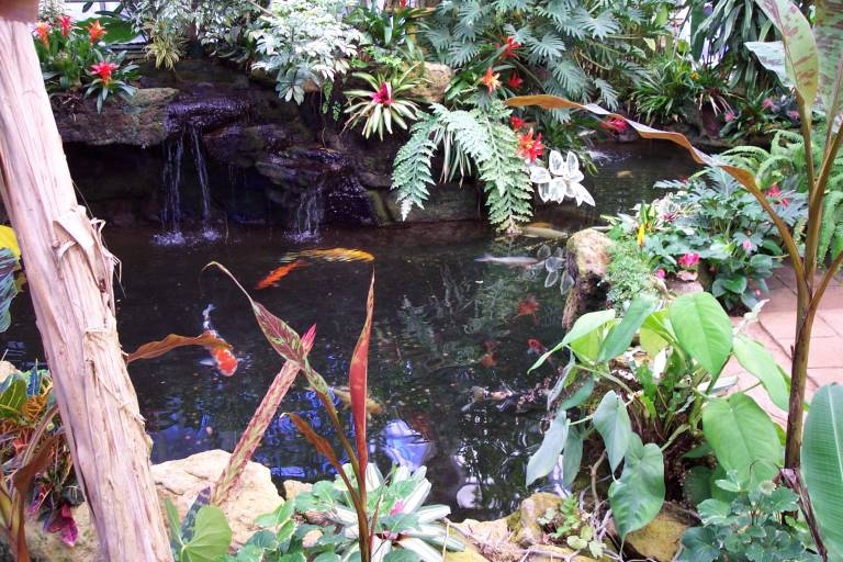 Sherman library and gardens for Minimum depth for koi pond