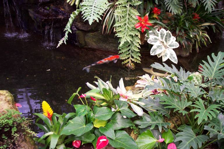 Sherman library and gardens for Koi fish pond depth