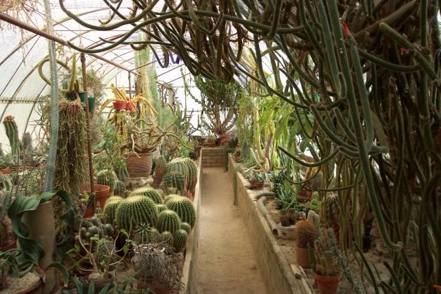 Bon The Cactarium, Inside The Cactarium ...