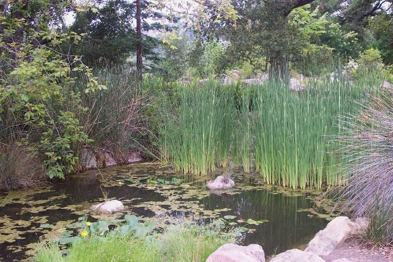 Charmant The Santa Barbara Botanic Garden Is Located At 1212 Mission Canyon Road, In Santa  Barbara. See Map.