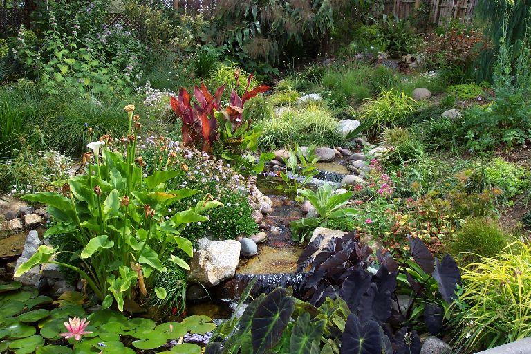 Superb Quail Botanical Gardens