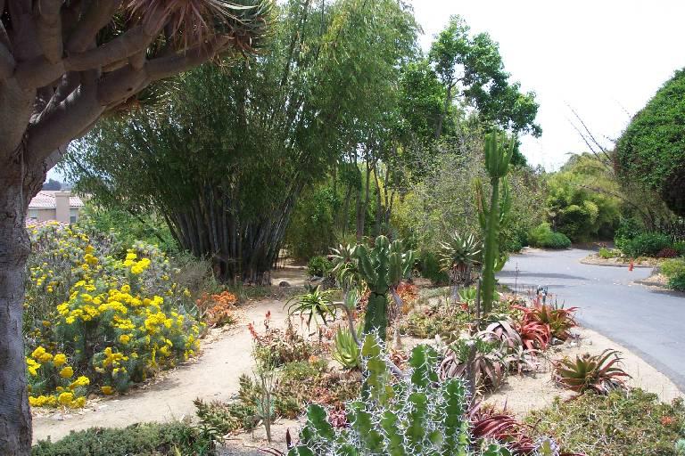 Quail Botanical Gardens Foundation Inc Garden Ftempo